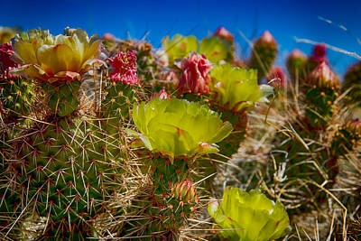 Digital Art - Cactus At The End Of The Road by Bartz Johnson