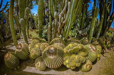 Photograph - Cactus Balls by Mark Perelmuter