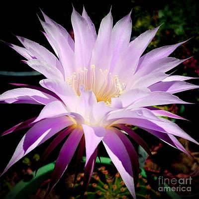 Photograph - Cactus Beauty  by Garnett Jaeger