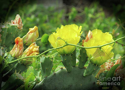 Photograph - Cactus Beauty by Roberta Byram