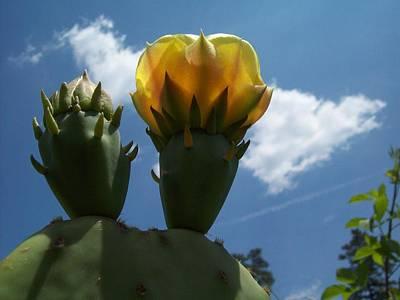 Cactus Beginning To Bloom Art Print