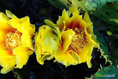 Cactus Bloom 2 Original by Everett Spruill