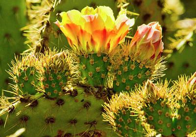 Cactus Bloom Original by Arthur Bohlmann