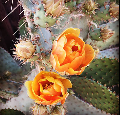 Photograph - Cactus Bloom  by Daniele Smith
