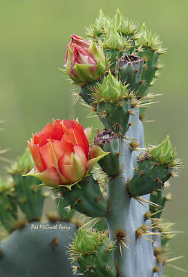 Photograph - Cactus Bloom by Pat McGrath Avery