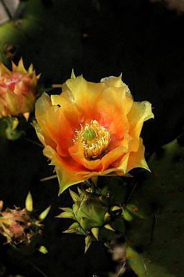 Photograph - Cactus Bloom by Robert Anschutz