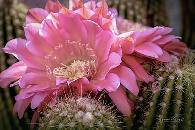 Photograph - Cactus Bloom by Steve Kelley