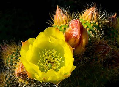 Photograph - Cactus Blossom  by Derek Dean