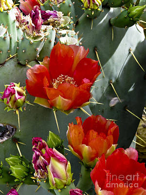 Cactus Blossom Art Print by Kathy McClure