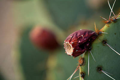 Photograph - Cactus Blossom by Michael McGowan