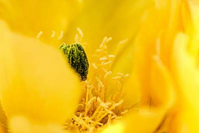 Photograph - Cactus Blossom Up Close And Personal by Larry Ricker