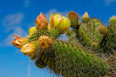 Photograph - Cactus Blue by Derek Dean