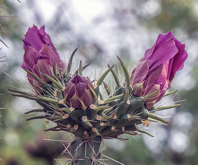 Photograph - Cactus Buds by Tam Ryan