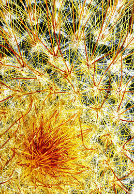 Photograph - Cactus Close Up by Peg Runyan
