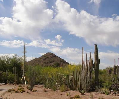 Cactus Country Art Print by Jeanette Oberholtzer