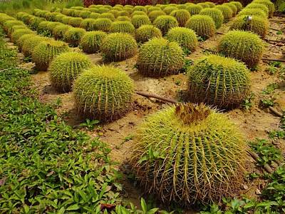 Exploramum Photograph - Cactus Creation by Exploramum Exploramum