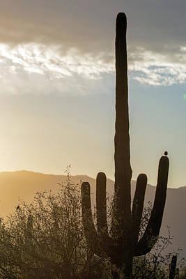 Photograph - Cactus Dancing by Dan McManus