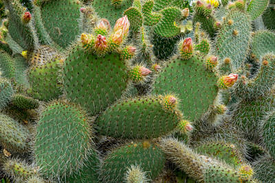 Photograph - Cactus by Derek Dean