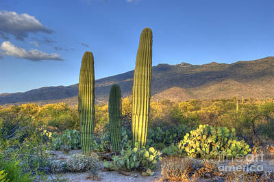 North American Photograph - Cactus Desert Landscape by Juli Scalzi