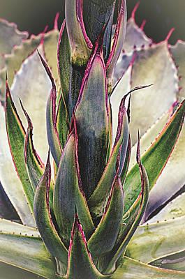 Photograph - Cactus Desert Plant by Julie Palencia