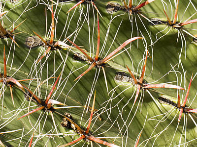 Photograph - Cactus Diagonal Pattern by Jean Noren