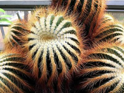 Photograph - Cactus by Diane Lent