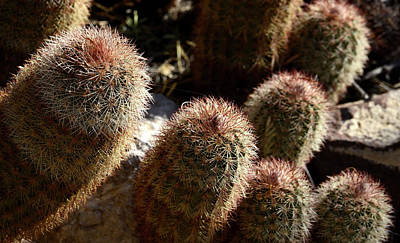 Photograph - Cactus Fingers by Nadalyn Larsen