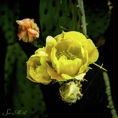 Photograph - Cactus Flower 07-010 by Scott McAllister