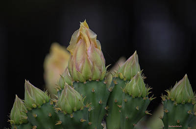 Photograph - Cactus Flower 1 by Roberta Byram