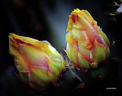 Photograph - Cactus Flower 3 by Roberta Byram