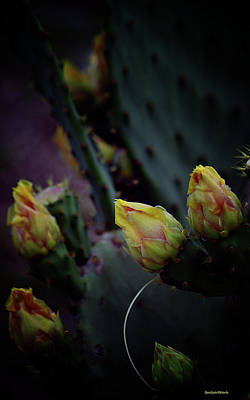 Photograph - Cactus Flower 4 by Roberta Byram