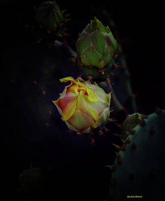 Photograph - Cactus Flower 5 by Roberta Byram