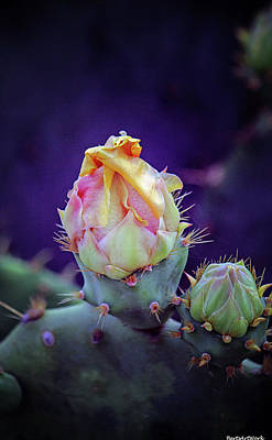 Photograph - Cactus Flower 6 by Roberta Byram