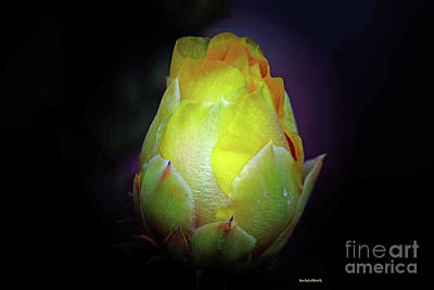 Photograph - Cactus Flower 7 by Roberta Byram