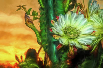 Photograph - Cactus Flower At Sunrise by Pete Rems