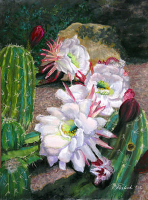 Pastel - Cactus Flower by Carole Haslock
