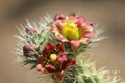 Photograph - Cactus Flower by Douglas Miller