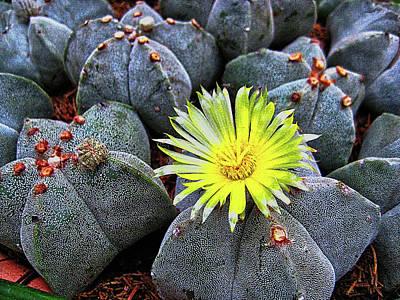 Photograph - Cactus Flower by Hans Erik Nielsen