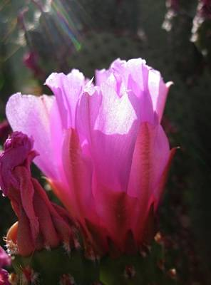 Photograph - Cactus Flower by Mary Ellen Frazee