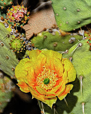 Mark Myhaver Rights Managed Images - Cactus Flower op46 Royalty-Free Image by Mark Myhaver