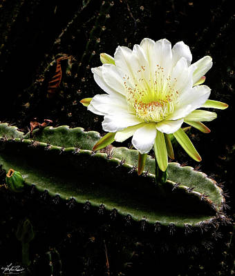 Photograph - Cactus Flower by Phil and Karen Rispin
