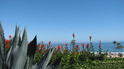Photograph - Cactus Flowers Seascape by Doreen Whitelock