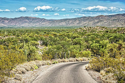 Rincon Mountains Wall Art - Photograph - Cactus Forest Drive by George Buxbaum