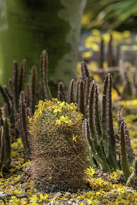 Photograph - Cactus Garden 4508-040418-1 by Tam Ryan