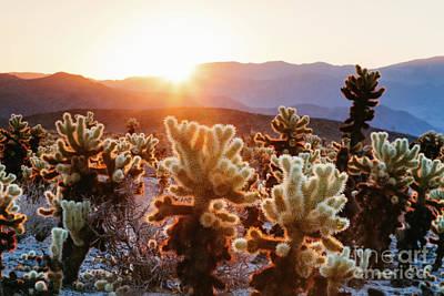 Photograph - Cactus Garden, Joshua Tree National Park, Usa by Matteo Colombo