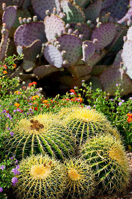 Photograph - Cactus Garden by Kevin Munro