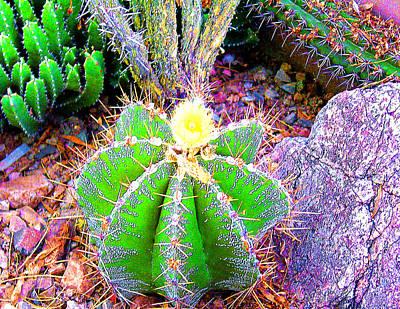 Photograph - Cactus Garden by Merton Allen