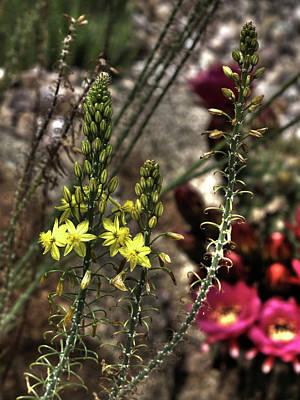 Photograph - Cactus Garden by Richard Stephen