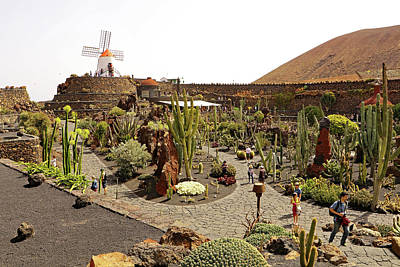Photograph - Cactus Garden by Tony Murtagh