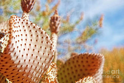 Photograph - Cactus Geometry by David Arment